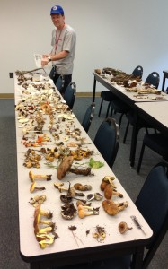 Marc Cubeta standing over tables with collections of fungi from the Goose Creek State Park bioblitz